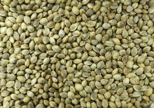 Hemps Seeds